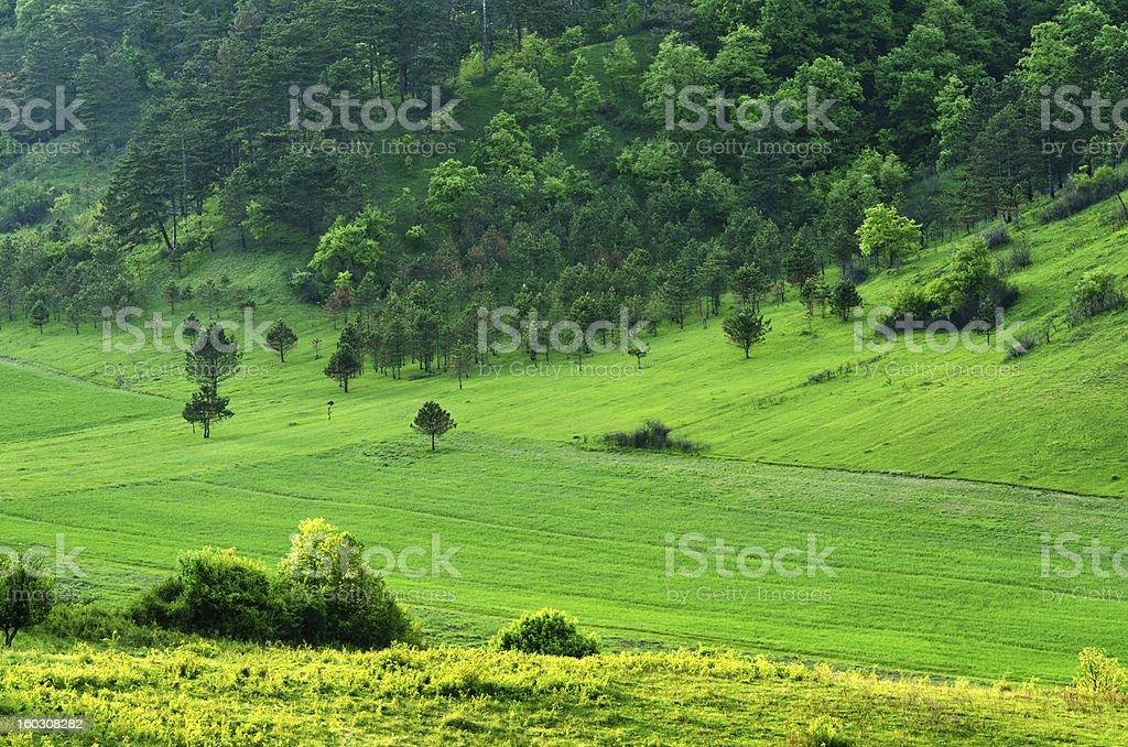 pinewood royalty-free stock photo
