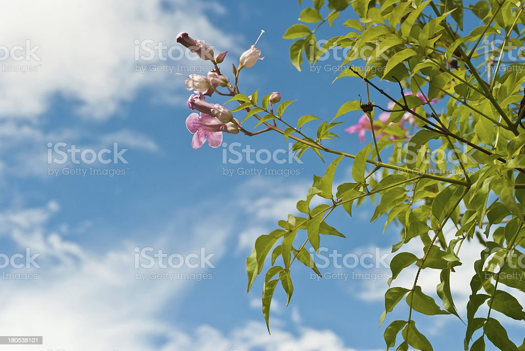 Pink abloom flower in sunny spring day. stock photo