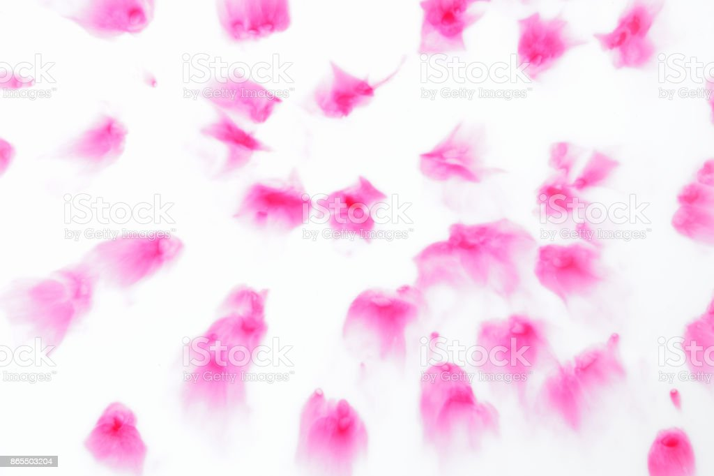 Rosa Abstrakte Flecken Auf Weißem Hintergrund Farbe Aufgelöst In ...