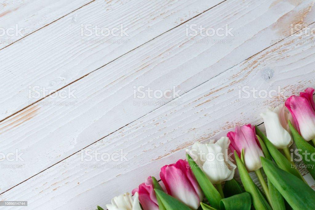 Pink adn White Tulips on white wooden background stock photo