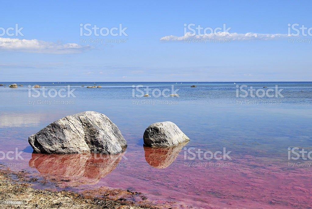 Pink algal bloom at the Baltic sea stock photo