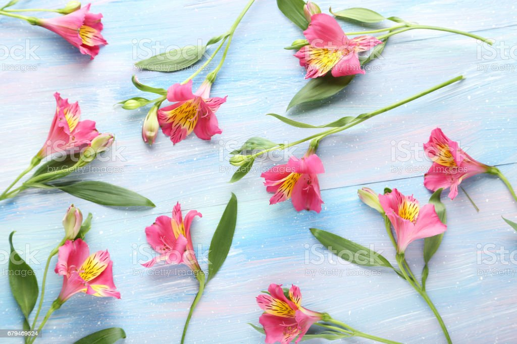 Pink alstroemeria flowers on blue wooden table 免版稅 stock photo