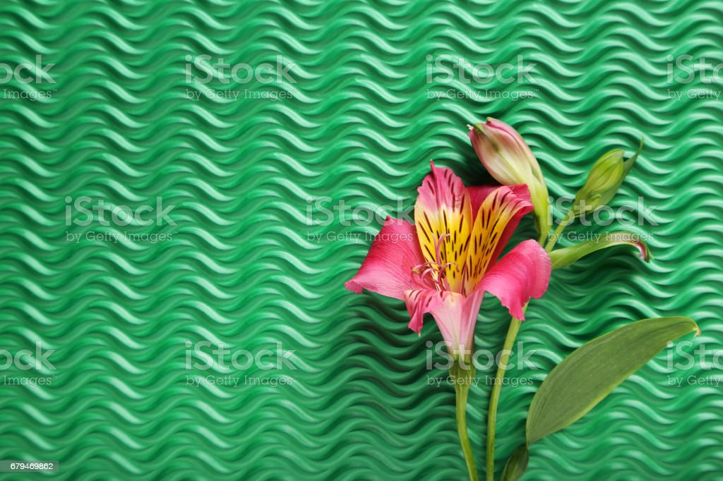 Pink alstroemeria flowers on green background 免版稅 stock photo