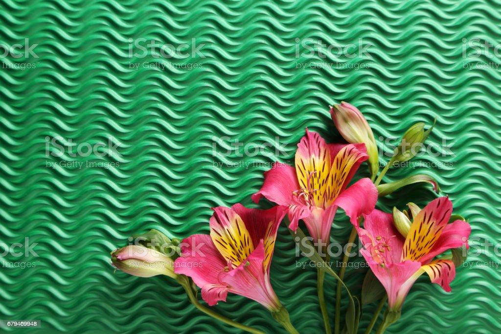 Pink alstroemeria flowers on green background 免版稅 stock photo