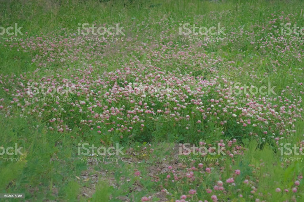 Pink and green field of flowers stock photo