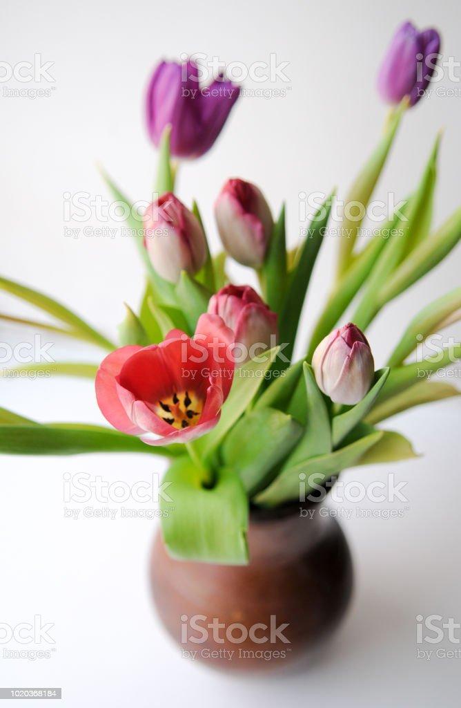 Tulipes roses et lilas dans un pot d'argile brune. - Photo