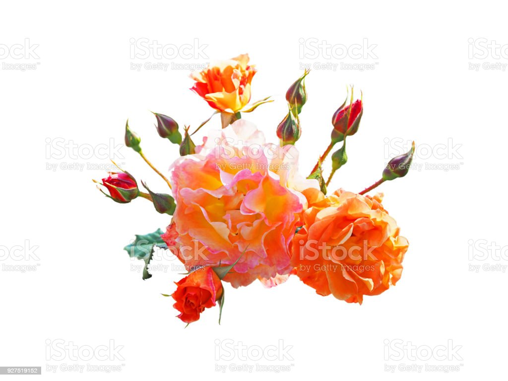 Pink And Orange Rose Flowers Arrangement Isolated On White Bright