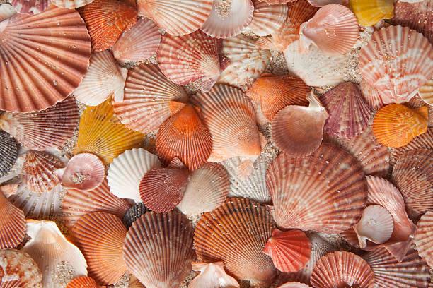 Pink and orange seashell background foto
