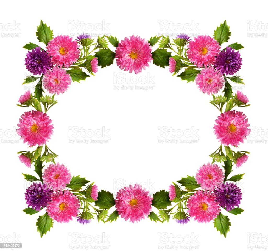 Pink And Purple Aster Flowers And Buds Frame Stock Photo More