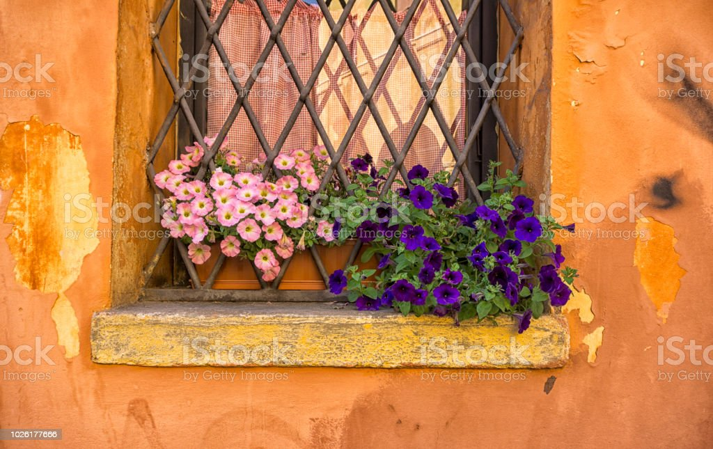 Pink and purple flowers on a window sill stock photo
