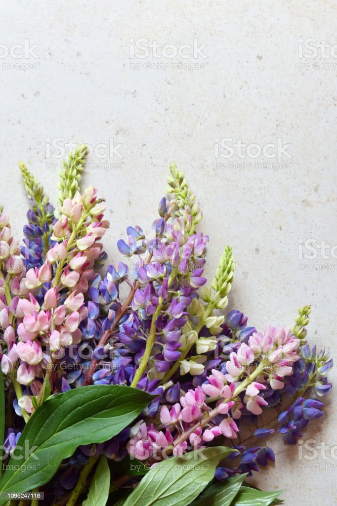 Pink and purple lupine flowers on marble background. Birthday, Mother's day, Valentine's Day, March 8, Wedding card or invitation. Festive Floral decorative background. Top view. stock photo