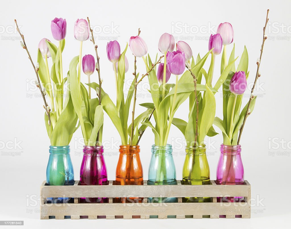 Pink and purple tulips royalty-free stock photo