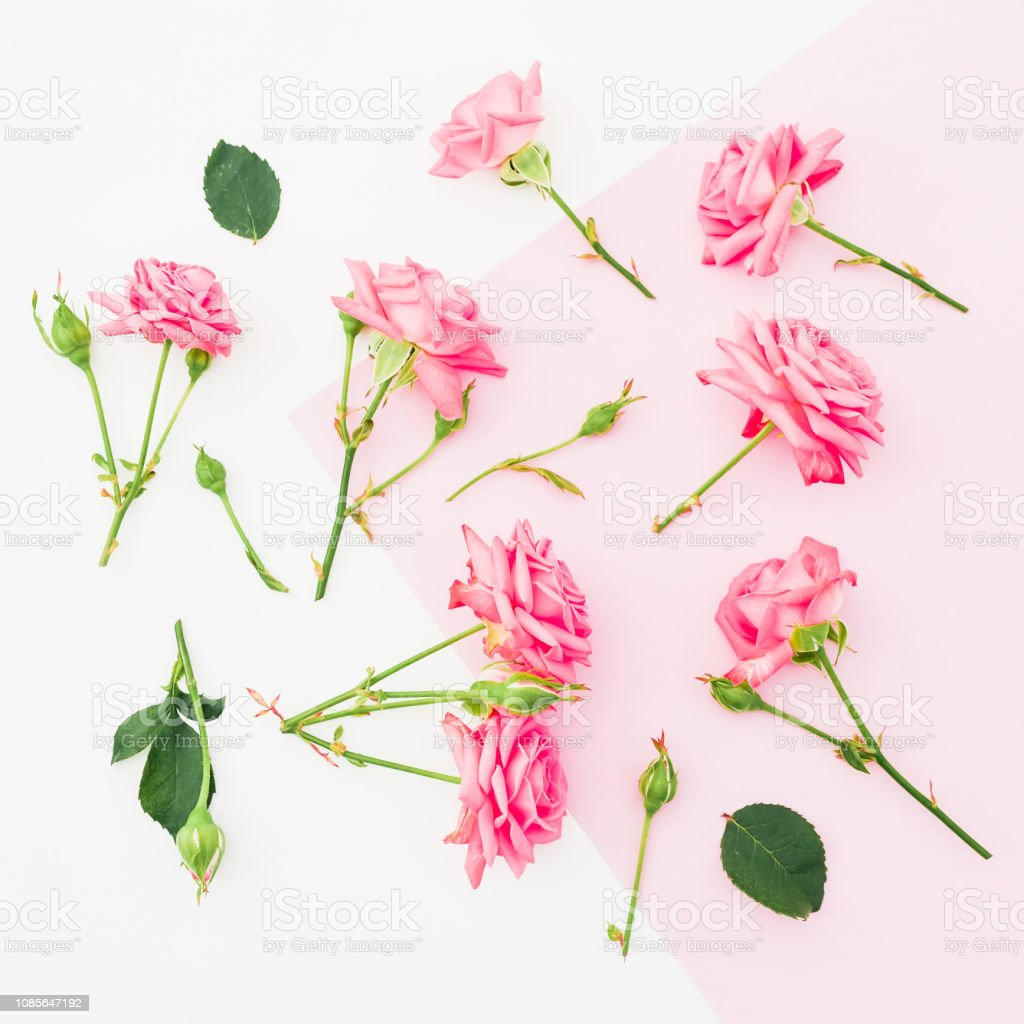 Pink and white background with pink roses flowers. Flat lay. Top view
