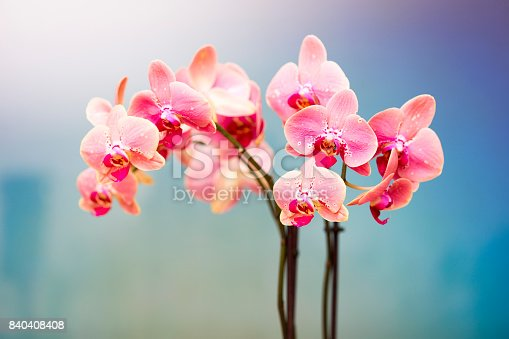Pink And White Orchid, spa centre