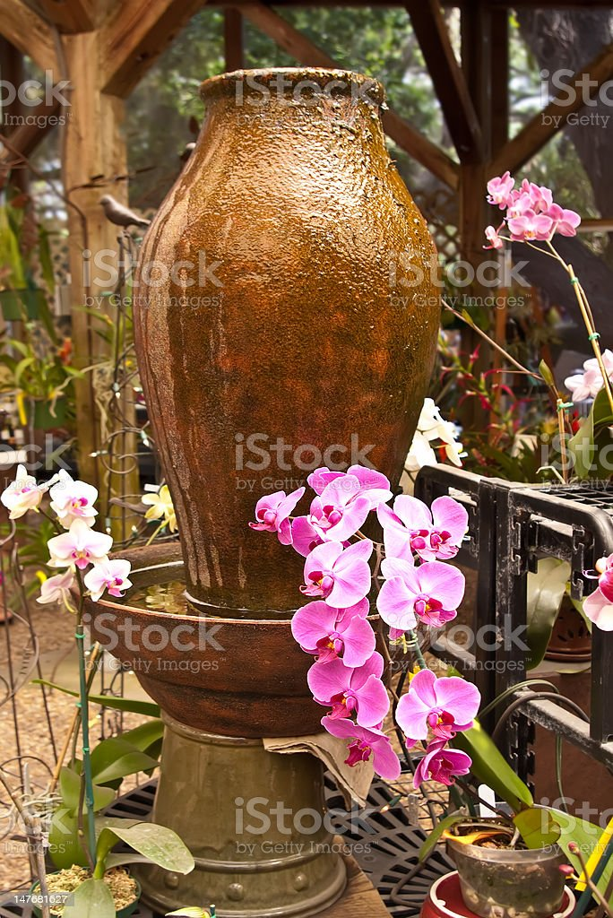 Pink and White Orchids in Garden royalty-free stock photo