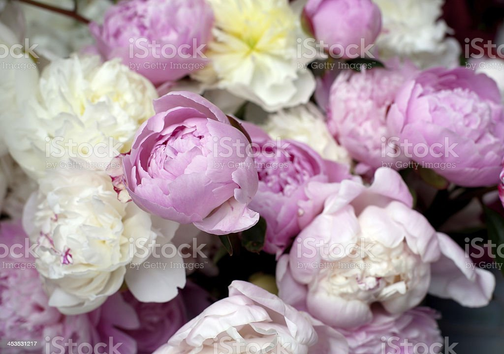 Pink and white peonies.  Bouquet for sale.  Farmer's market. royalty-free stock photo