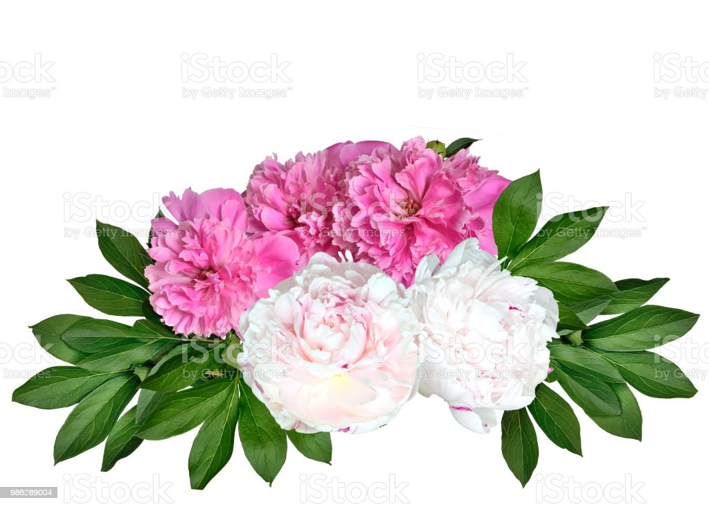 Pink And White Peonies Bouquet Isolated On A White Background Stock Photo Download Image Now Istock