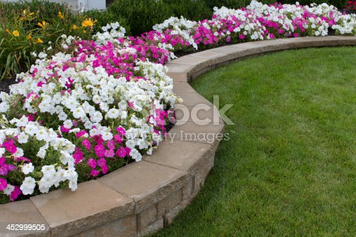Peink and White petunias on the flower bed along with the grass