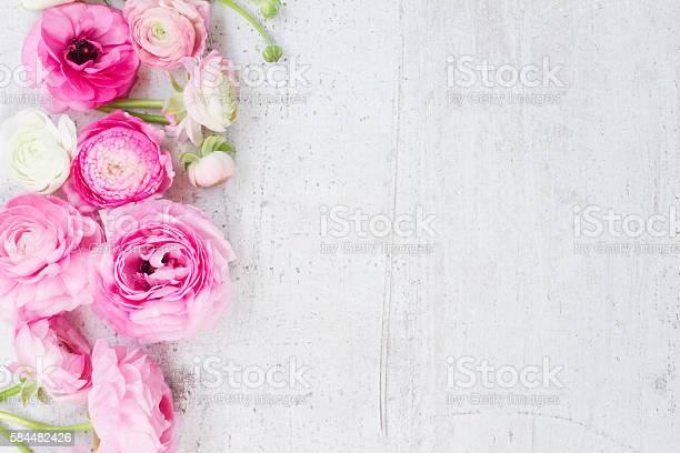 Pink and white ranunculus flowers picture id584482426?b=1&k=6&m=584482426&s=612x612&h=b9 sqsflbark71pqziyxkjun hvtyhpnzhrj3hobhoy=