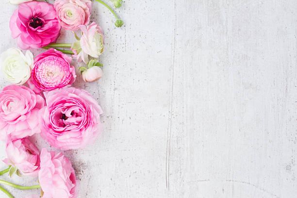 Pink and white ranunculus flowers picture id584482426?b=1&k=6&m=584482426&s=612x612&w=0&h=vwpwj7uuyg rowb0oapid9zznpkzkwr442xsa0k7qxi=