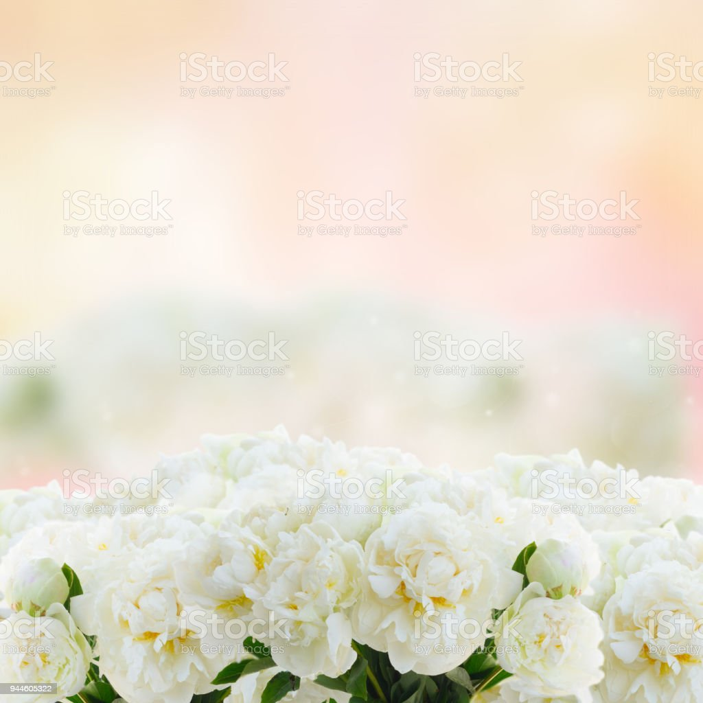 Pink and white ranunculus flowers stock photo more pictures of pink and white ranunculus flowers royalty free stock photo mightylinksfo