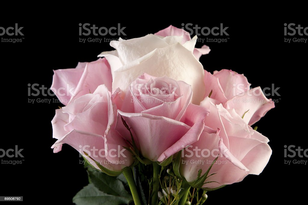 Pink and White Rose Arrangement royalty-free stock photo