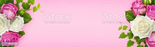 Pink and white rose flowers with ivy green leaves in a corner picture id1171649154?b=1&k=6&m=1171649154&s=612x612&h=9bag7f5rrsmhtgxikyqbb1rprxgz znewlxgidjnspk=