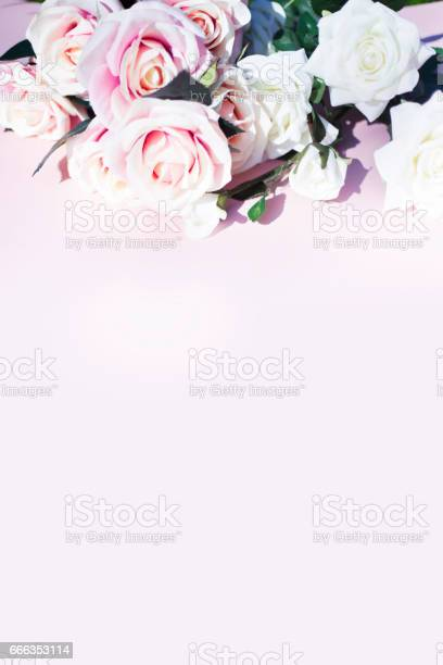 Pink and white roses on pink background picture id666353114?b=1&k=6&m=666353114&s=612x612&h=mmjo6hv7r0 lpfqnil1vfgmmeuu04rygzkow xahwb4=