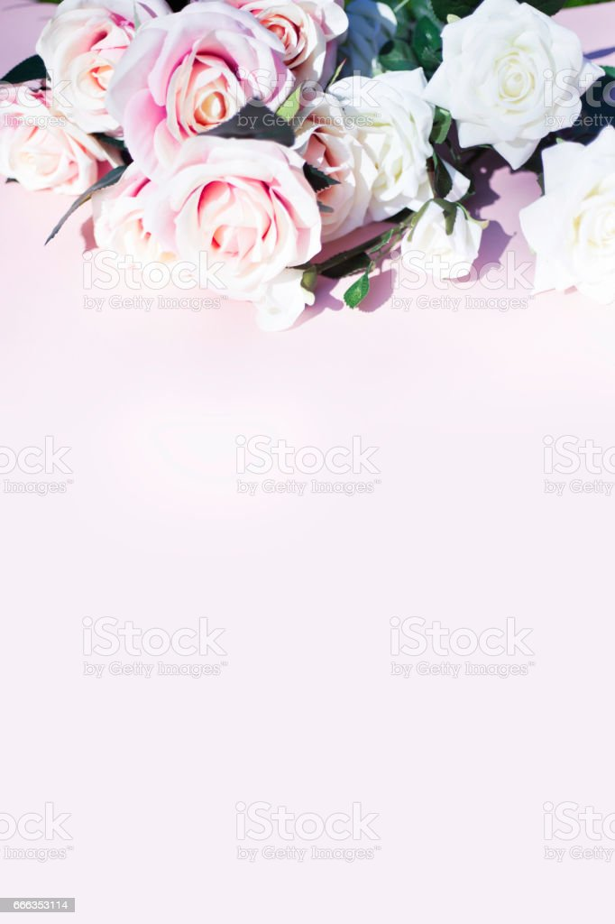 Pink and white roses on pink background stock photo