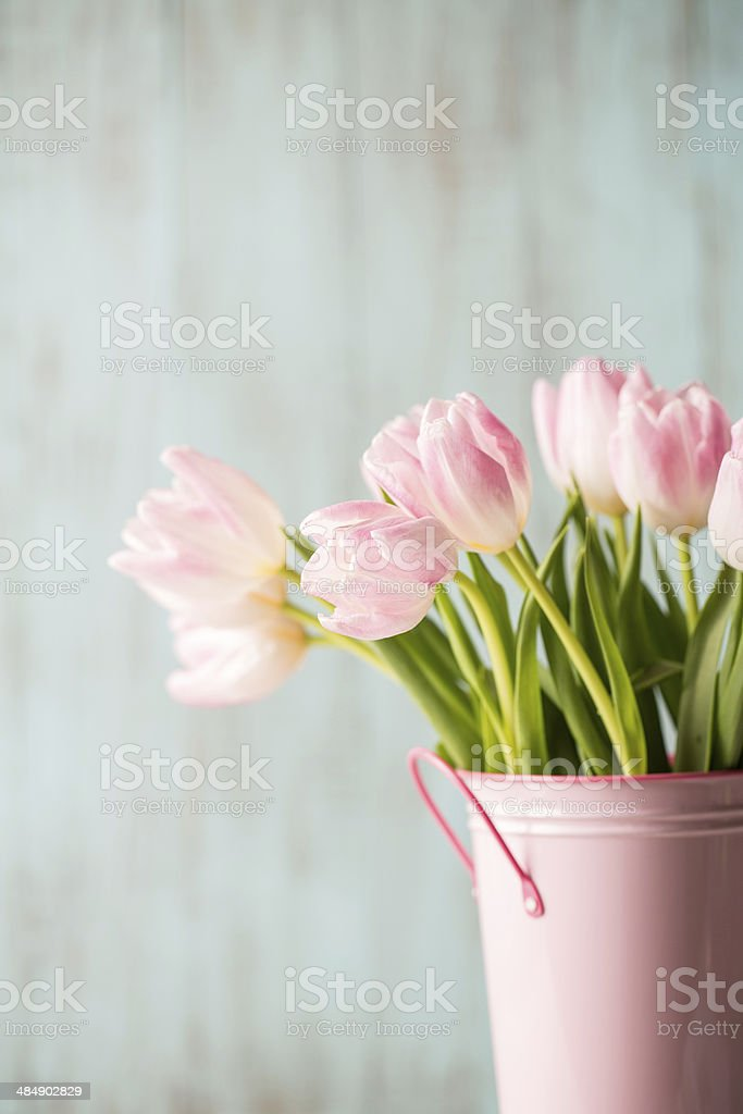 Pink and White Tulips in Pink Bucket Vase stock photo