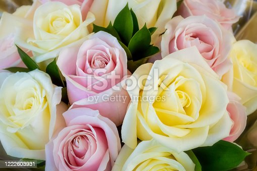 istock Pink and yellow roses 1222603931
