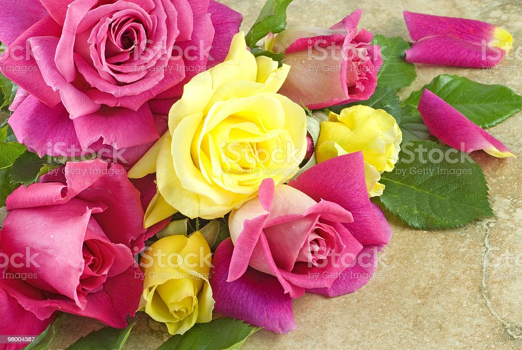 Pink and Yellow Roses Vintage Background royalty-free stock photo