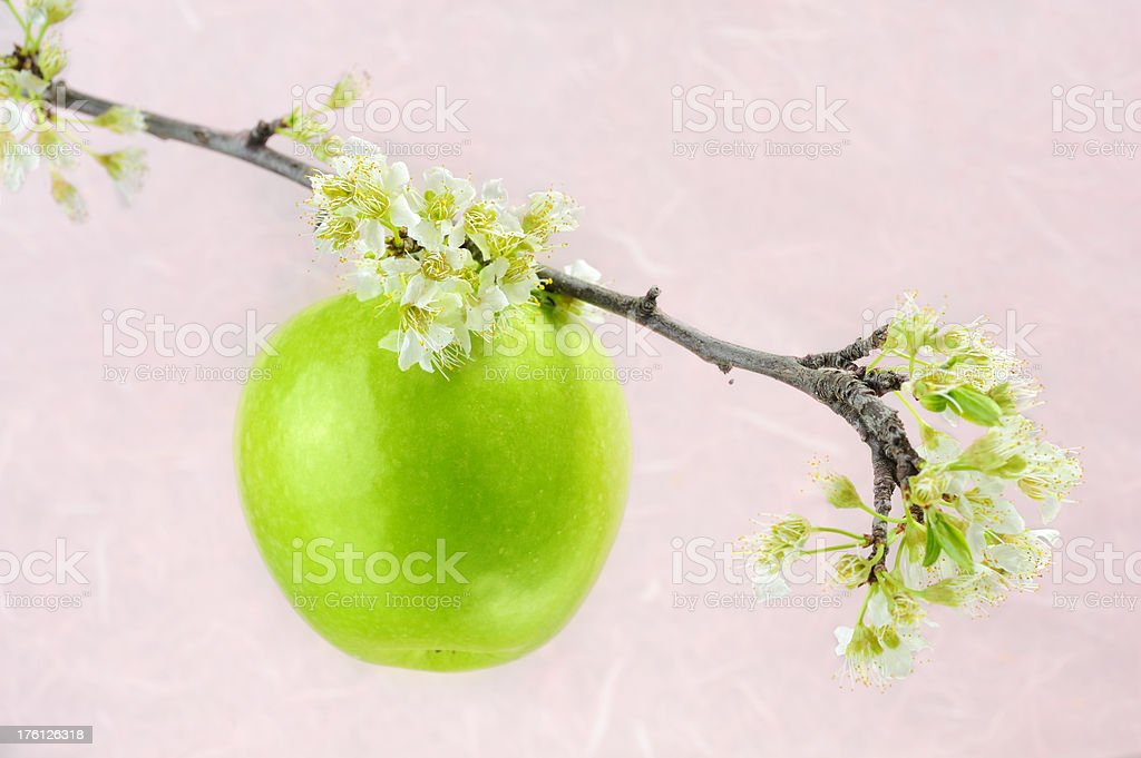 Pink Apple Blossom royalty-free stock photo
