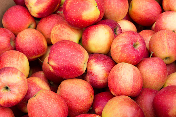 Pink Apples stock photo