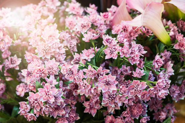 pink artificial flowers stock photo