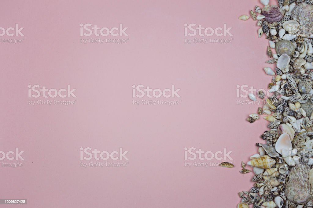pink background and a strip of sea shells stock photo download image now istock https www istockphoto com photo pink background and a strip of sea shells gm1209827425 350230269
