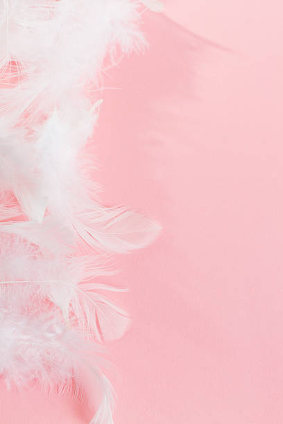 Pink Background with Fluffy feathers stock photo