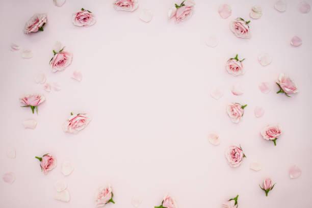 Rosa Hintergrund mit Rosen – Foto