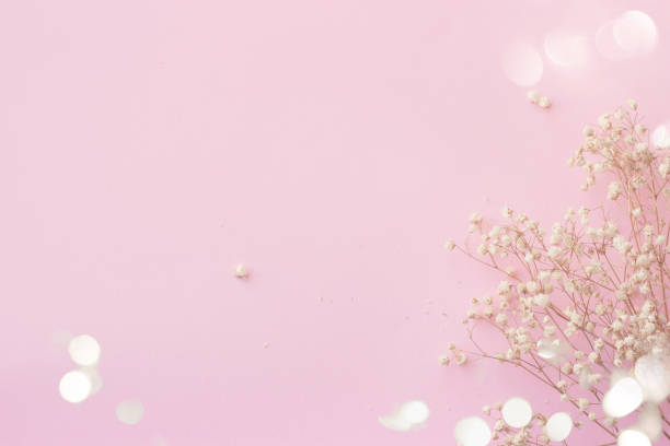 Pink background with small white flowers and bokeh, with copy space stock photo