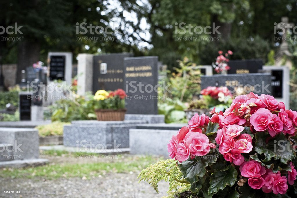 Pink begonia at a tombstone royalty-free stock photo
