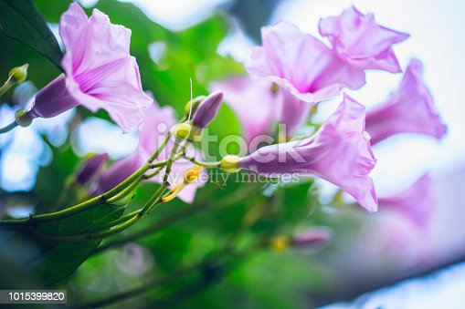 Bouquet, Flower, Plant, Seedling, Russia, Botanical garden, Beauty in Nature