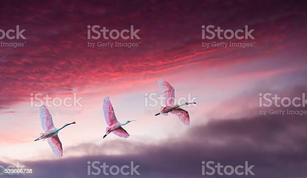 Pink birds against beautiful dramatic sky panoramic view picture id539666738?b=1&k=6&m=539666738&s=612x612&h=7mr00xamttowv5ifvnm1il6y buyz0lxgg5lzypf8gu=