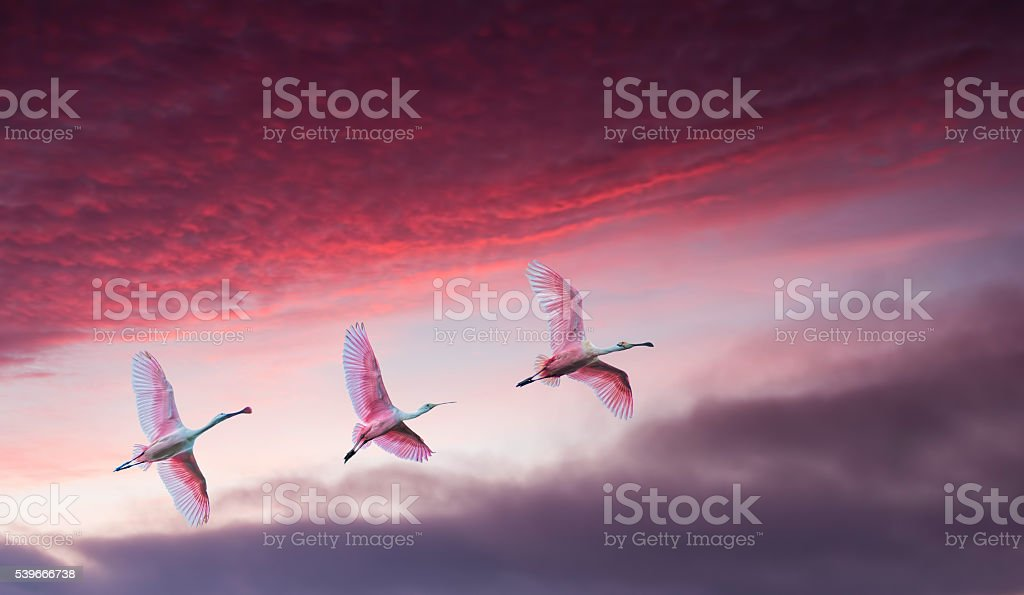 Pink birds against beautiful dramatic sky panoramic view stock photo