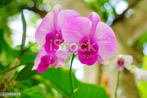 Orchid, Flower, Bouquet, Moth Orchid, Plant