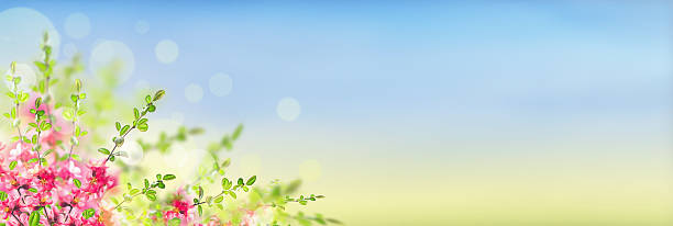 Pink blooming on sunny landscape background with bokeh, banner stock photo