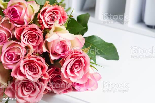 나무에 피 핑크 장미 0명에 대한 스톡 사진 및 기타 이미지