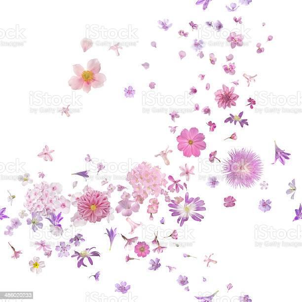 Pink blossom flower buds breeze picture id486020233?b=1&k=6&m=486020233&s=612x612&h=q9o1cud2xtgwjjfcp5yuvymveklt sbjz63bvgu6nze=