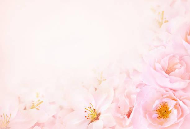 Pink blossoming rose spring flowers picture id1134426272?b=1&k=6&m=1134426272&s=612x612&w=0&h=6i3bwqtpz6mqamtplujkfao7j2upzzbevzmklwnwari=