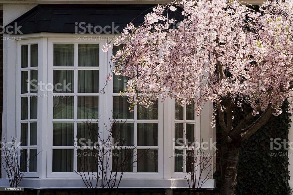 Pink blossoms and white window stock photo