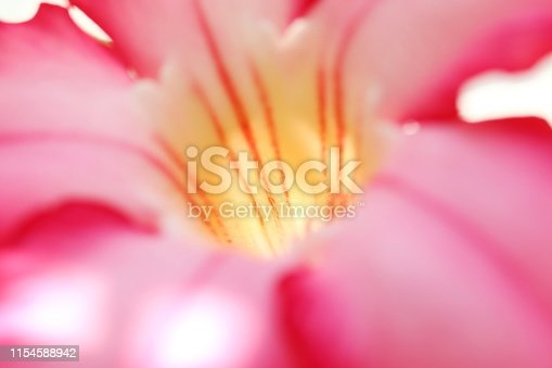 Pink blurred flower carpel background close-up space